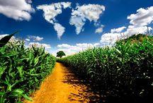 Environment / An appreciation of natural environments and eco-friendly  urban environments