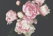 Fleurs de Jour