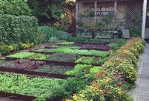 Edible landscaping / Landscaping and design ideas for my garden which is hopefully both edible and pretty.
