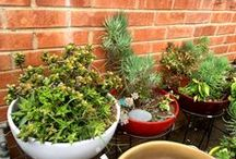 Potted Plant Ideas / Ideas