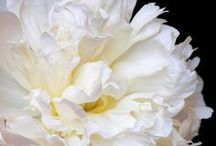 ! My Fine Art Flowers !