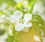 ! Spring Fine Art !