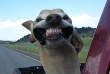 Laughter / by Heather Erickson