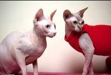 Pets dressed in style / Trots tonen onze katten en honden klanten hun jassen en shirts.