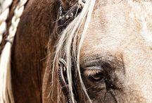 Horse • Neigh