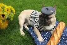 Bully / French bulldogs, frenchies, bulldogs / by Bling Bling Bang Bang