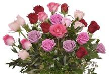 Award Winning Roses
