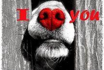 ~ Animals ~