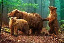 Animalia. / The beautiful, quiet souls of earth...