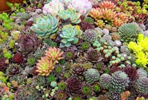 #Plantas Int. #Cactus