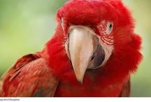 #Mascotas #Aves