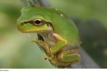 #Reptiles y #Anfíbios