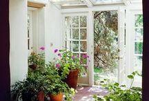 plantes de casa