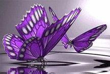 Purple Heaven / For lovers of purple