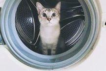 Cat board / Are you a cat person?
