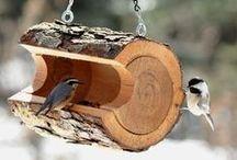 cases d'ocells