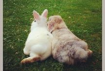 So cute, bunnies!