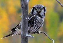 Birds - owls... / by Ulrike Grace