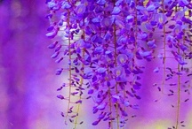 Lovely ethereal Wisteria / by Ulrike Grace