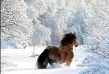 Horses, horses, horses / by Ulrike Grace