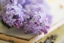 Lilacs a sign of spring! / by Ulrike Grace