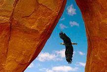 Birds - Eagles / by Ulrike Grace