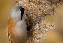 Birds - Finch / by Ulrike Grace