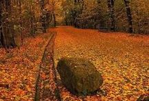 paths / by Ulrike Grace