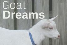 ~{ Homestead Critters }~ / Animals are an integral part of the homestead. Learn how to care for goats, cows, chickens, pigs, llamas, ducks, quail, and more. [PINNERS This board is for all homestead animal care - livestock, pets, and even bees. Check out our boards for contributing opportunities.]