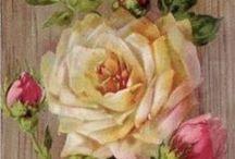 Flores & Inspirações