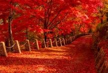 Beautiful Autumn! / by Teresa 💗 Paris