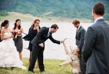 Weddings / It's your Wedding Day, make Steamboat Springs, Colorado, your ideal place for the festivities!