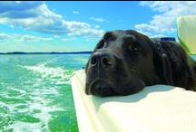 Animals on board! / Pets on board with their owners