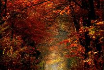 Autumn wonders
