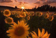 LET THE SUN SET