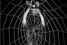 Spider's work