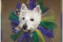 Wonderful Westies / I love White West Highland Terriers aka Westies. This board is dedicated to the fun dogs.