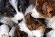 Puppies! / by Annie Shepherd