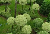 Garden LandScapes / by Pamela Jean