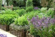 Outside - Growing Vegies, Herbs & Fruit