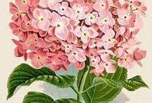 Printables - Flowers, Plants & Gardens