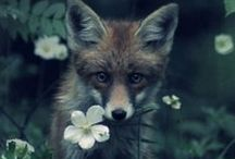 Fantastic Mr Fox...