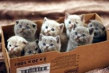 Cats / Cats everywhere :)