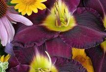 Nature's Wonders...SpringIntoSummer / by Pamela Jean