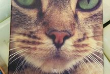 Cats - all kinds, all cute. / furry friends, always fascinating