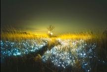 Inspiration  | Lights