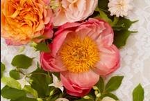 Inspiration  | Beautiful Flowers
