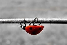 Ladybugs / by Marijke Martens