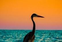 Natural World / by Bahiazul Villas & Club Fuerteventura