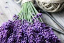 Lavender / Indulge in one of Jurlique's key ingredients - Lavender!